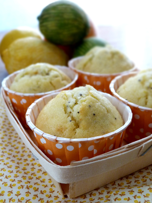 Muffins-agrumes-graines-pavot2
